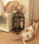 猫カフェ部2